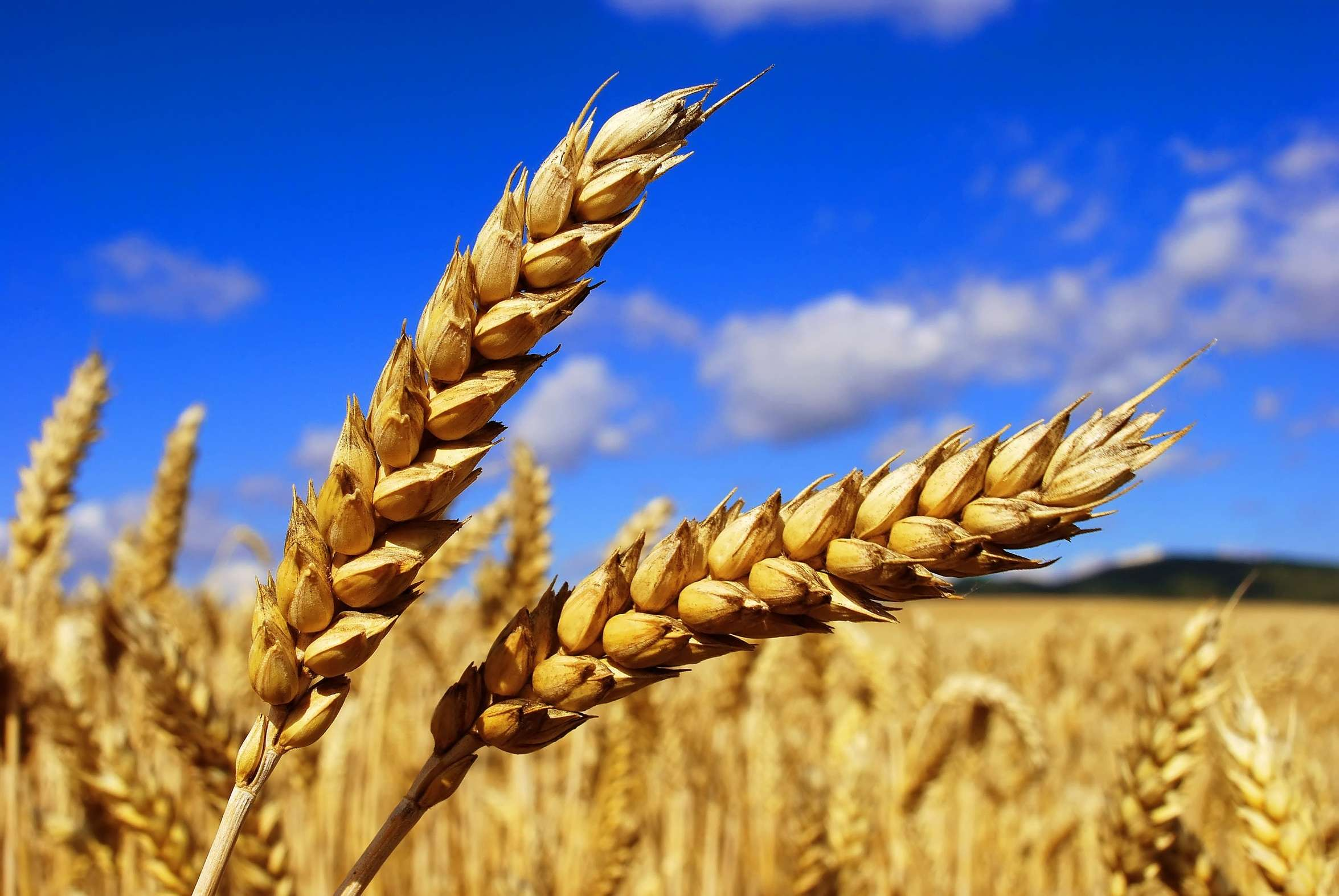 development of the agricultural sector Agriculture and development: a brief review of the literature  the agricultural sector continues to play a  a, agriculture and development: a brief review of.