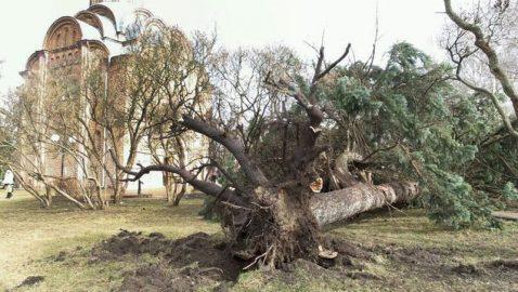В Чернигове ураган вырывал с корнями деревья