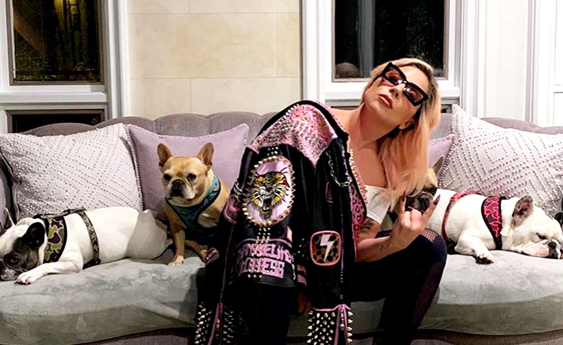 Леди Гага обещает $500 тысяч за похищенных во время прогулки бульдогов