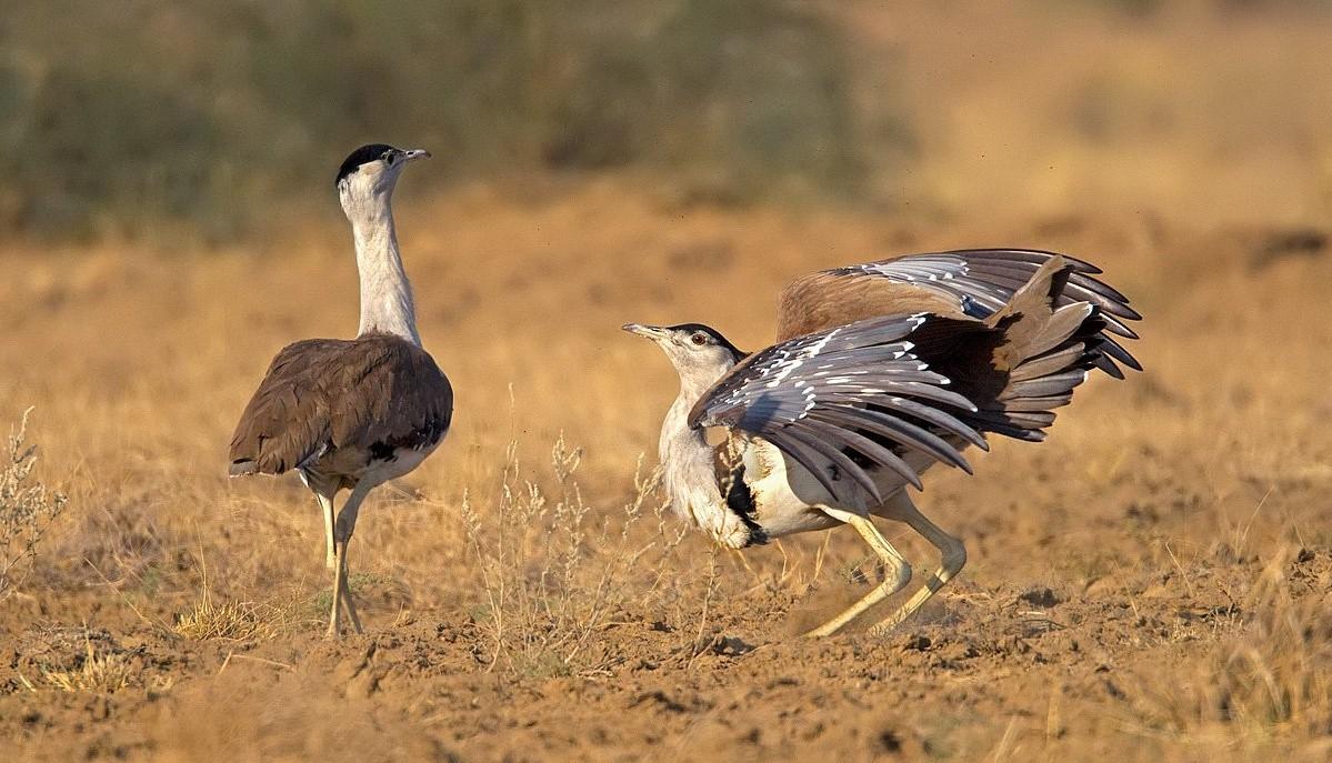 Полуслепая птица стала причиной провала масштабных реформ в Индии